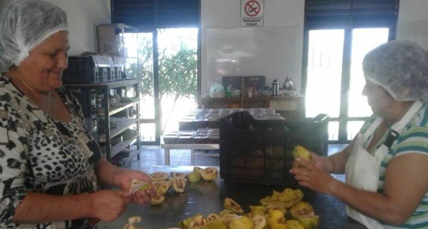 La Municipalidad de Andalgalá trabaja con el INTA en la investigación de 11 variedades de membrillo